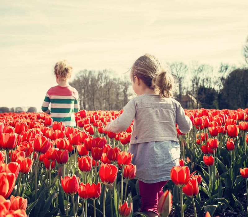Arrivée du printemps